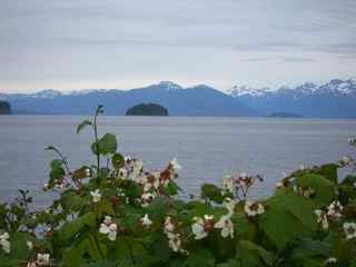 Alaska Scenery Flowers Mountains Ocean